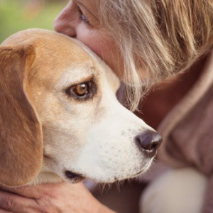 beagle con signora