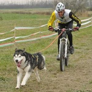 Salvatore-Fogliano-dog-bike