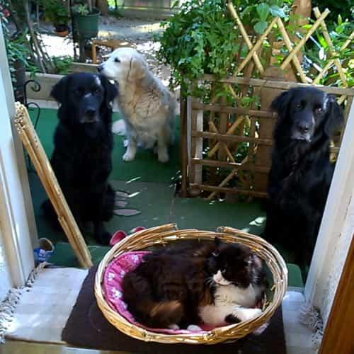 Cani e gatto