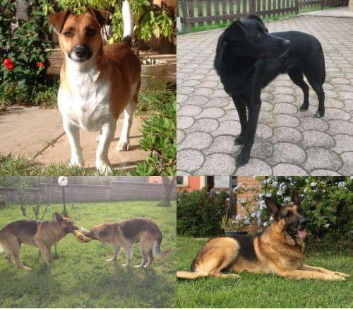 crocchette per cani dogbauer opinioni