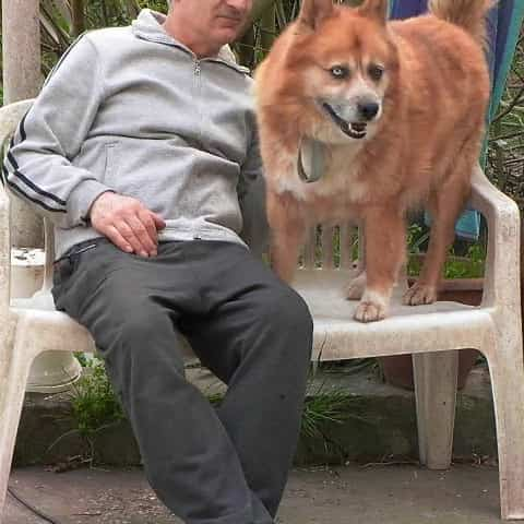 meticcio cane nordico crocchette dogbauer