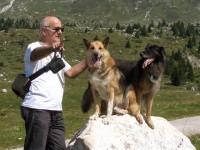 pastori tedeschi anziani alimentati con il cibo per cani dogbauer