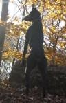 cane dobermann nel bosco
