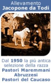 Allevamento Pastore Maremmano Abruzzese Jacopone da Todi