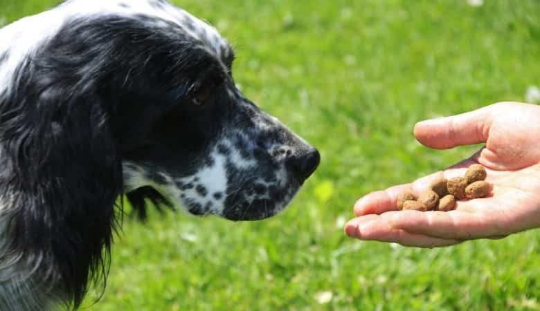 cibo per cani online